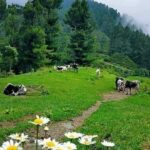 Shakai - It's like dream comes true, the Khyber Pakhtunkhwa (KP) government has decided to declare the most scenic valleys of district South Waziristan i.e., Shakai and Badar as tourist places. Talking to this scribe, Pakistan Tehreek-e-Insaf (PTI) MPA Naseerullah Wazir confirmed that the provincial government has decided to declare these valleys as tourist destinations and the formal announcement would be made soon in this regard. He said that as it was in our manifesto that we will leave no stone unturned to give beautiful places like Shakai and Badar Valleys as the best tourist destinations status and make them the best spots for tourists. Naseerulah was delighted as his efforts yielded the results and the provincial government has eventually decided to declare these valleys as tourist places. He vowed that in order to make these valleys the best tourist places, roads would be constructed and provision of other much-needed facilities would be ensured. The MPA said that Insha Allah, the day is not far when the waves of spring will come in these beautiful valleys of Waziristan, flowers will bloom and people will be happy to see the cool water flowing between the mountains. Shakai, a tehsil of South Waziristan Agency (SWA), with a population of around 70,000, is one of the most picturesque valleys, which is located some 33 km north of Wana, headquarter of the SWA. People from all over the region visit the beautiful hill resort especially on Eid festivals to immerse themselves in mountains covered with lush green trees, cold atmosphere, fresh air and most importantly, clouds on the roads hugging you full of happiness. Badar, another scenic spot, is home to a diversity of stunning landscapes and lush green hill tops. People loved to visit the valley in all seasons and mesmerized by its mount-watering beautiful places. However, the non-stopped and ruthless deforestation kills the beauty of these scenic places; hence the government needs to be tackled this issue on a pr